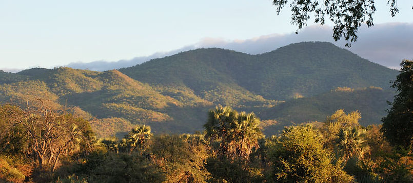 mountains-and-trees-biocarbon-partners.j
