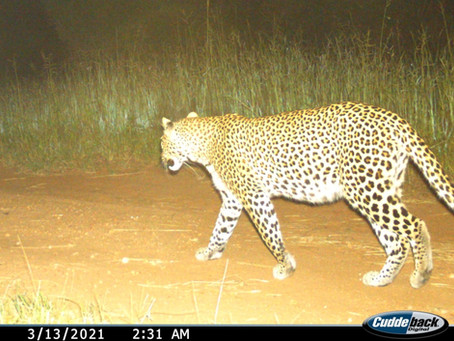 Community Camera Trapping: unlocking the value of wildlife