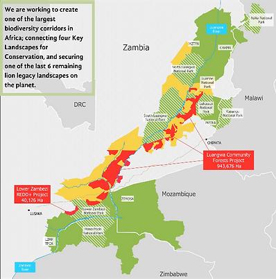 Lion Carbon map