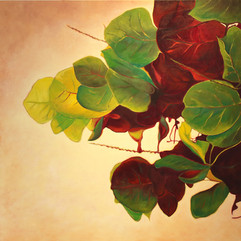 Seagrape Leaves by Daina Deblette.jpg