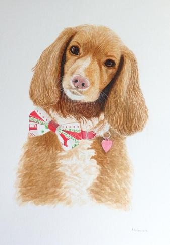 'Spaniel', watercolour on paper 29.7 x 21cm