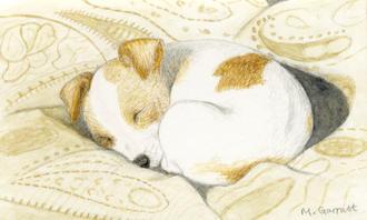 'Sleeping pup', watercolour on paper 10 x 14cm