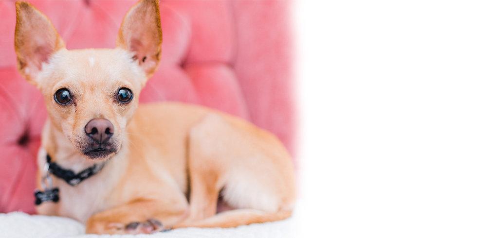Tiny | Shoppe Pup at Sydney's Shoppe of Beauty