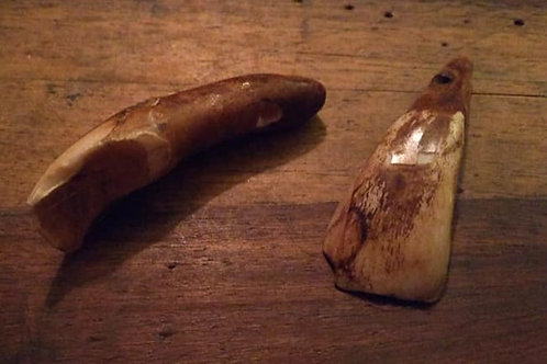 Bison Tooth