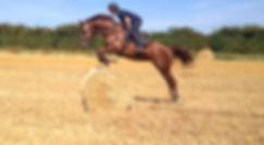 Equine holidays