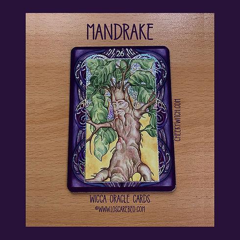 card-26-mandrake-850-sq-ad.jpg