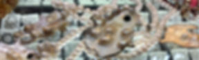 PearlNecklace.jpg