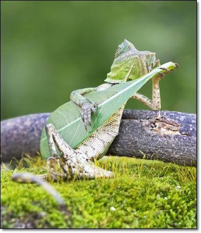 ... I love playing guitar
