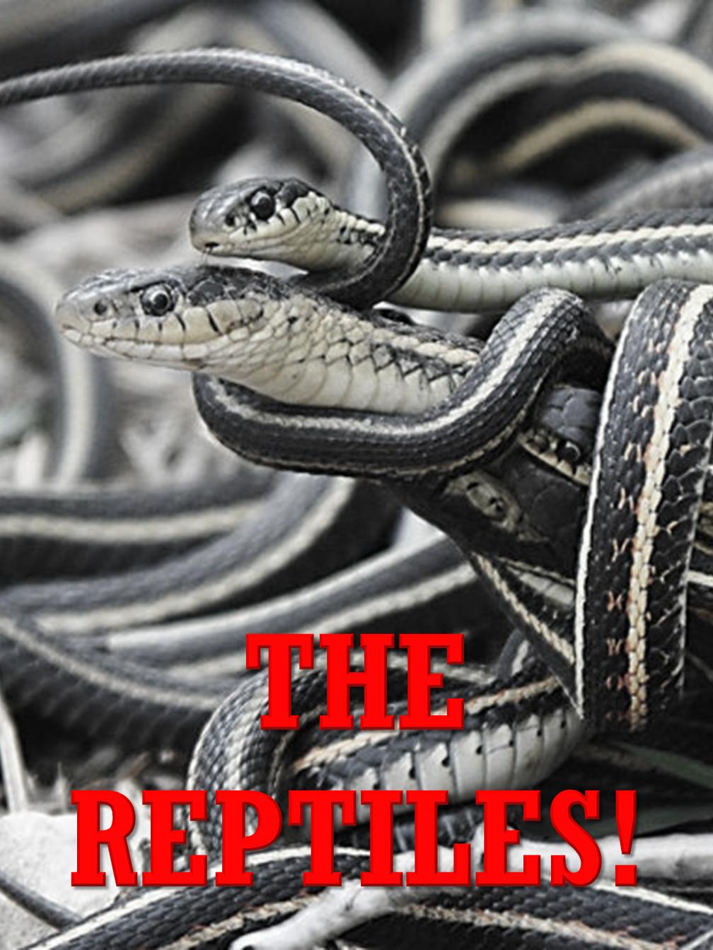 The Reptiles!