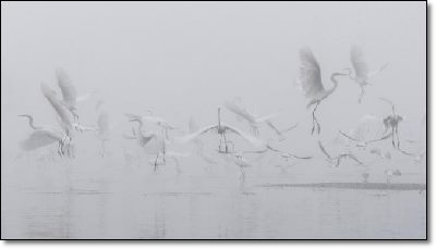 Storks or angels?