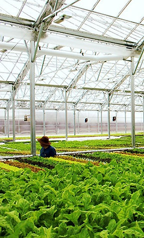 Bright-Farms-Greenhouse-feature_edited.jpg