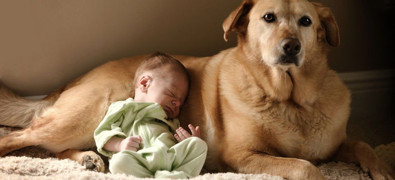 Baby and dog 6733612687_3c9c617f2a_z.jpg