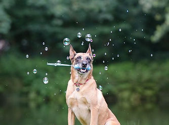 advanced tricks soap-bubbles-672639__480