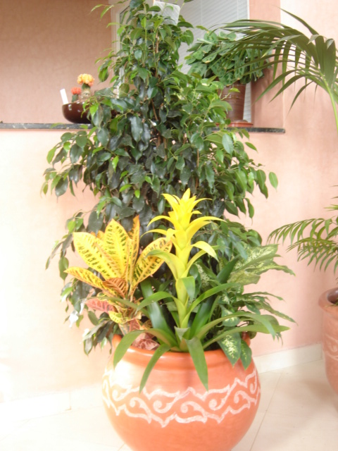 Plante  (57)