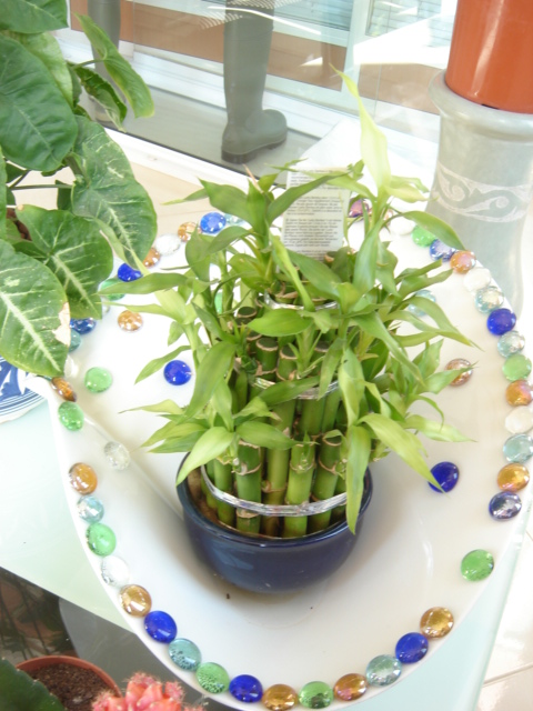 Plante  (40)