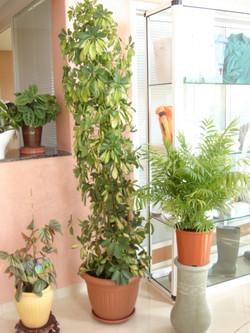 Plante  (38)
