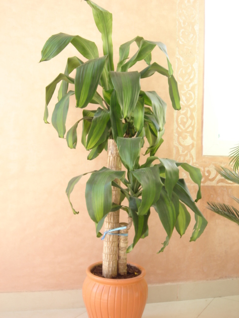 Plante  (27)