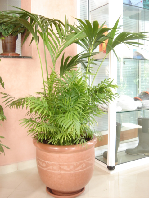 Plante  (58)