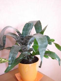 Plante  (50)