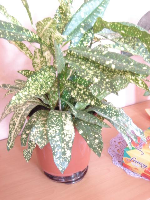 Plante  (49)