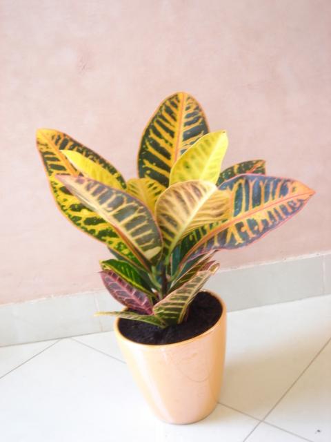 Plante  (13)