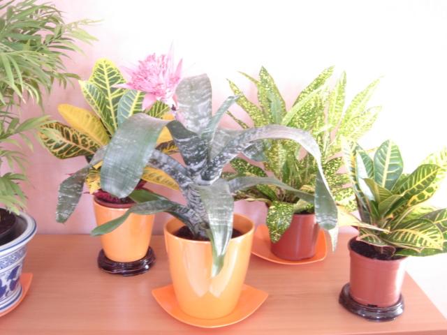 Plante  (16)