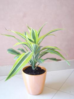 Plante  (14)