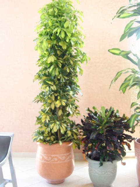 Plante  (10)
