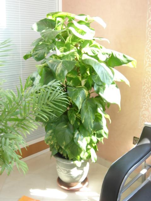 Plante  (41)