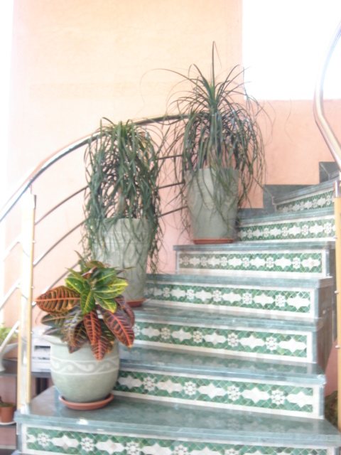 Plante  (6)