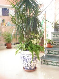 Plante  (62)