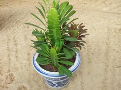 Plante  (77)