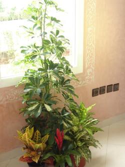 Plante  (54)
