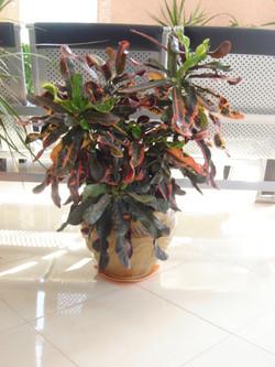 Plante  (36)