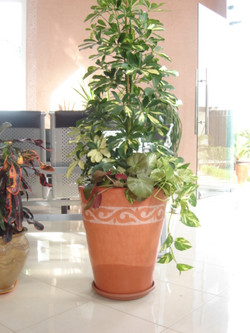 Plante  (59)