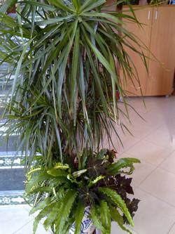 Plante  (69)
