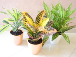 Plante  (15)