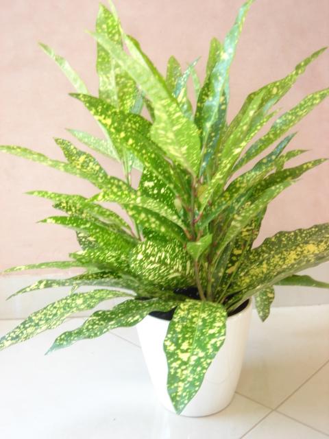 Plante  (12)