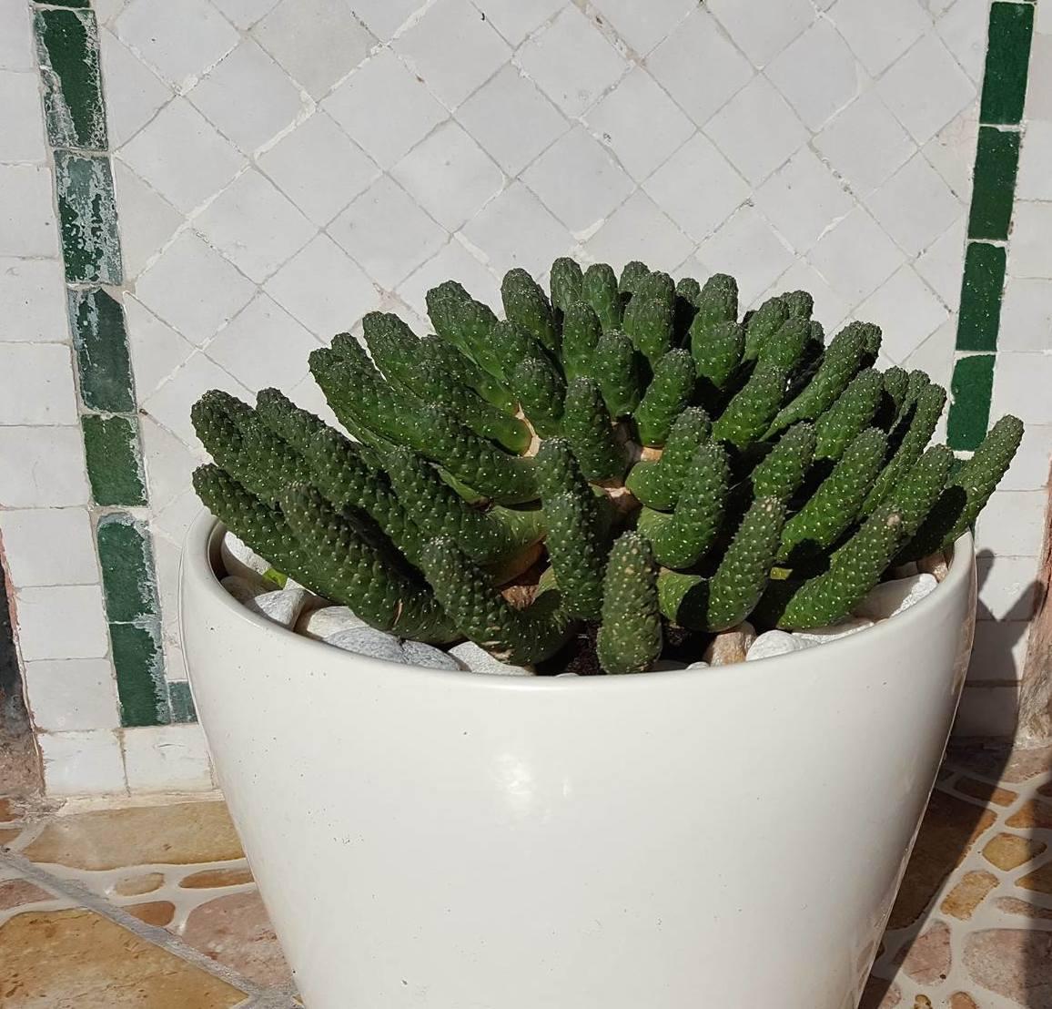 Cactus - 6
