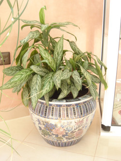 Plante  (32)