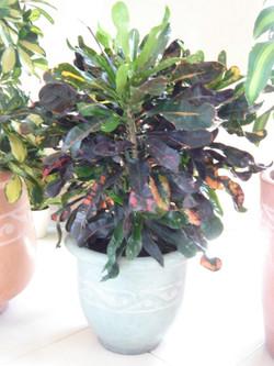 Plante  (7)
