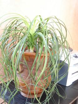 Plante  (34)