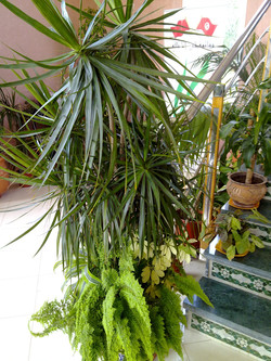 Plante  (70)