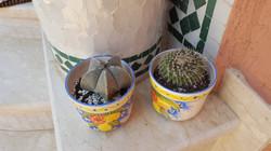 Cactus - 1