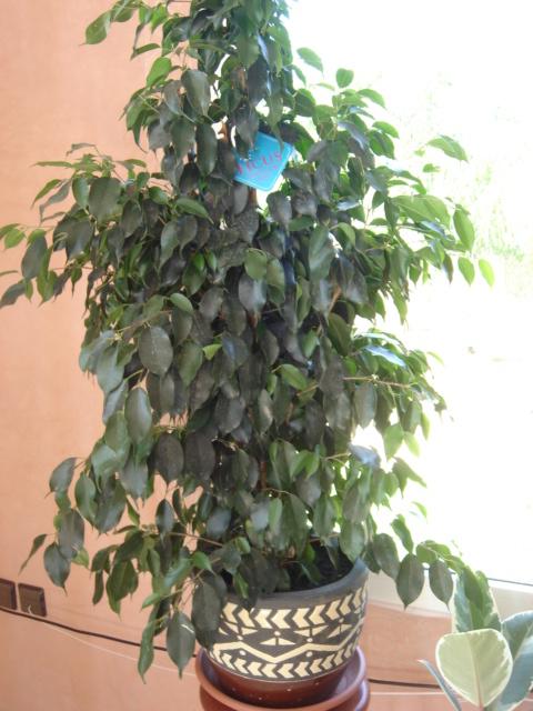 Plante  (33)