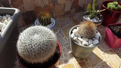 Cactus - 8