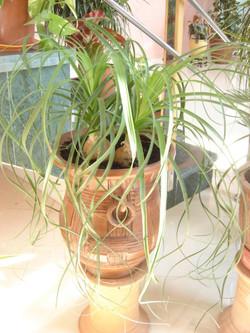 Plante  (35)