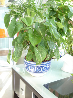 Plante  (39)