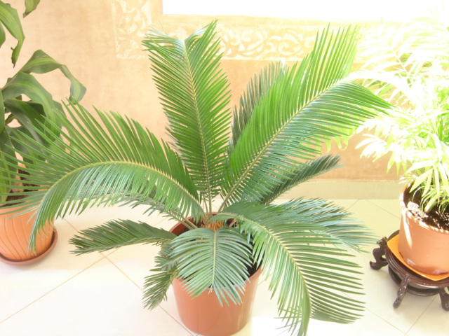 Plante  (28)