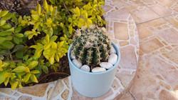 Cactus - 3